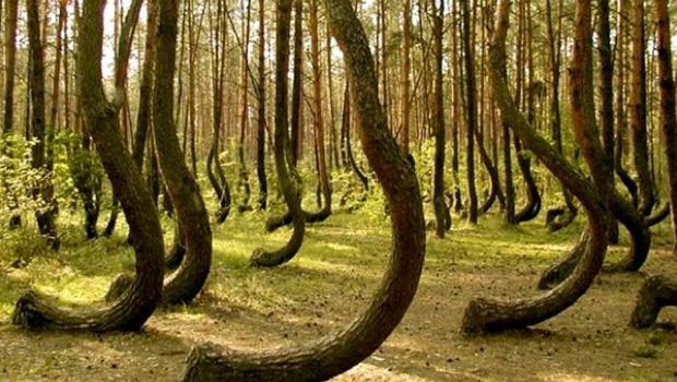 bosque-Hoia-Baciu2